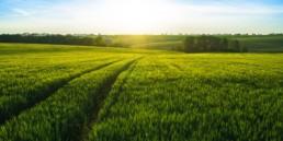 Varberg Energi - gröna fält